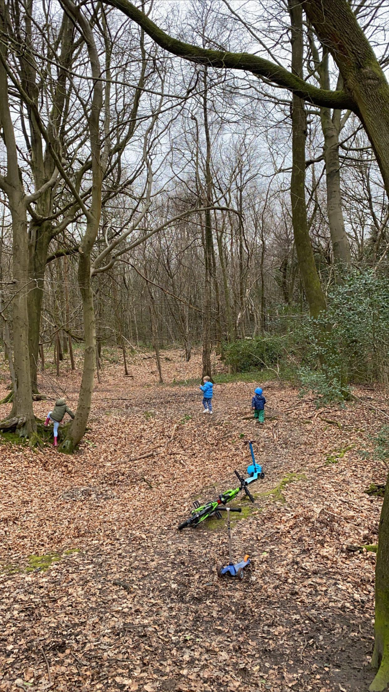 kids in a forest playing with their bikes on the ground, the forest is empty other than the 3 children, taken by instagram @ fortheloveof_mum